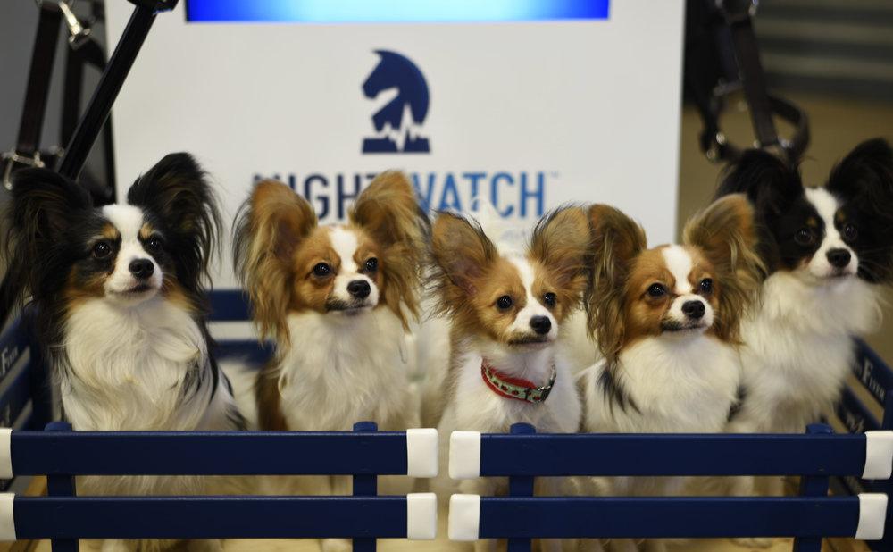 Puppy love at the Morgan Grand National & World Championship Horse Show in Oklahoma City, Oklahoma.