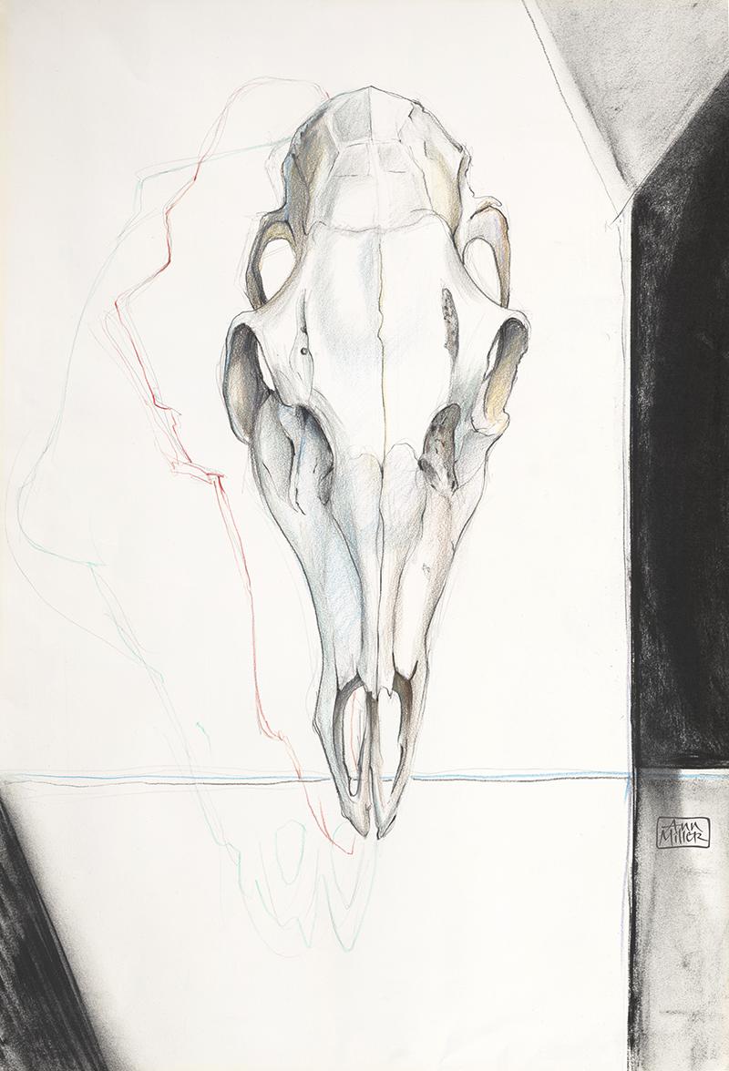 DeerSkull17x25AM_FB.png
