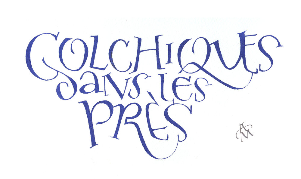 Colchiques1.jpg