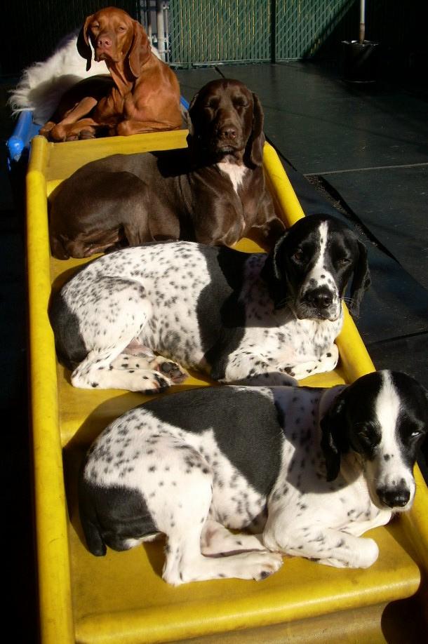 slide-dogs-4.jpg