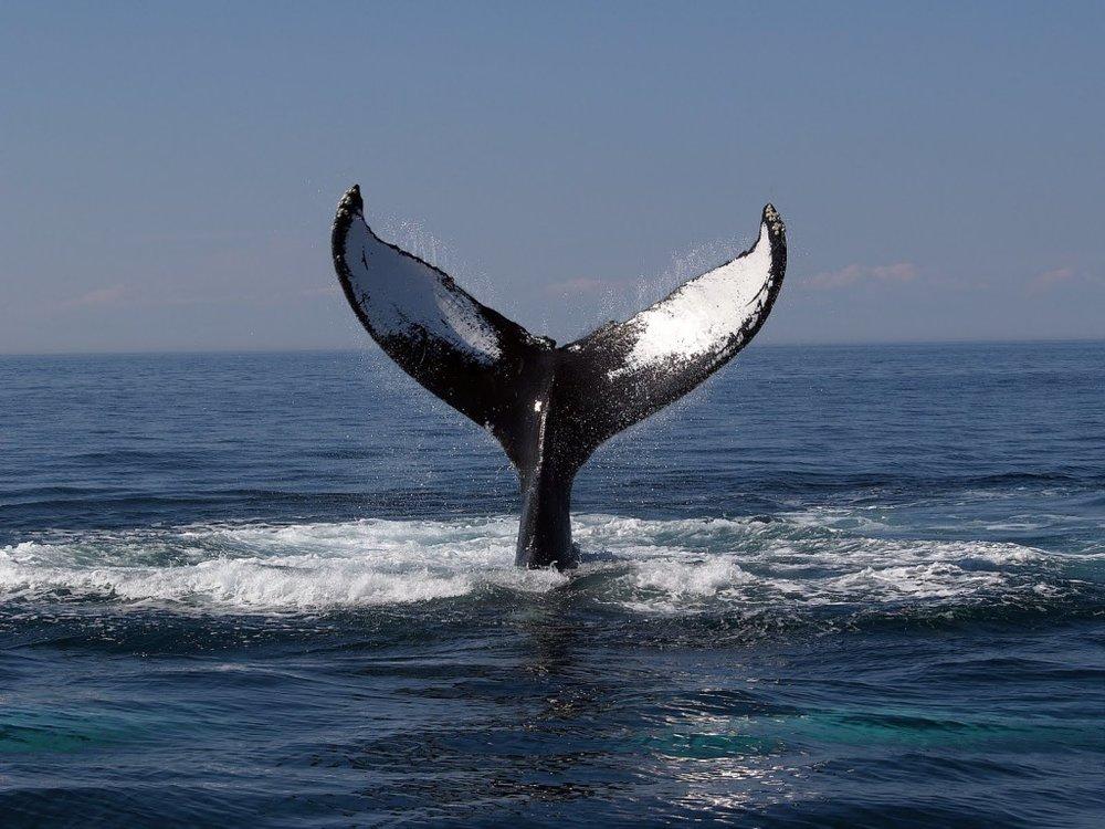 whale-1024x768.jpg