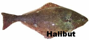 pacific_halibut.jpg