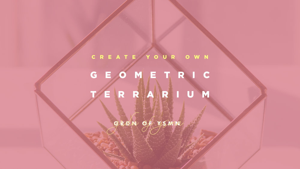 Geometric Terrarium DIY Kit