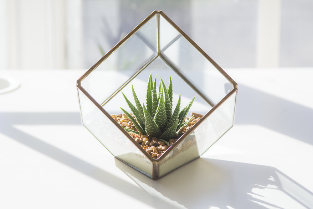 Geometric Terrarium DIY Kit - $45 - Assemble your very own modern Geometric Terrarium