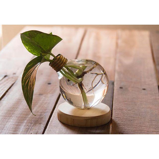 Edison's GRDN - $30 - Devil's Ivy Water Terrarium