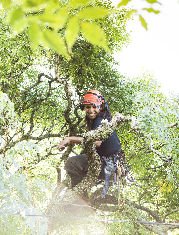 Tree-Pruning-TreeFellas.jpg