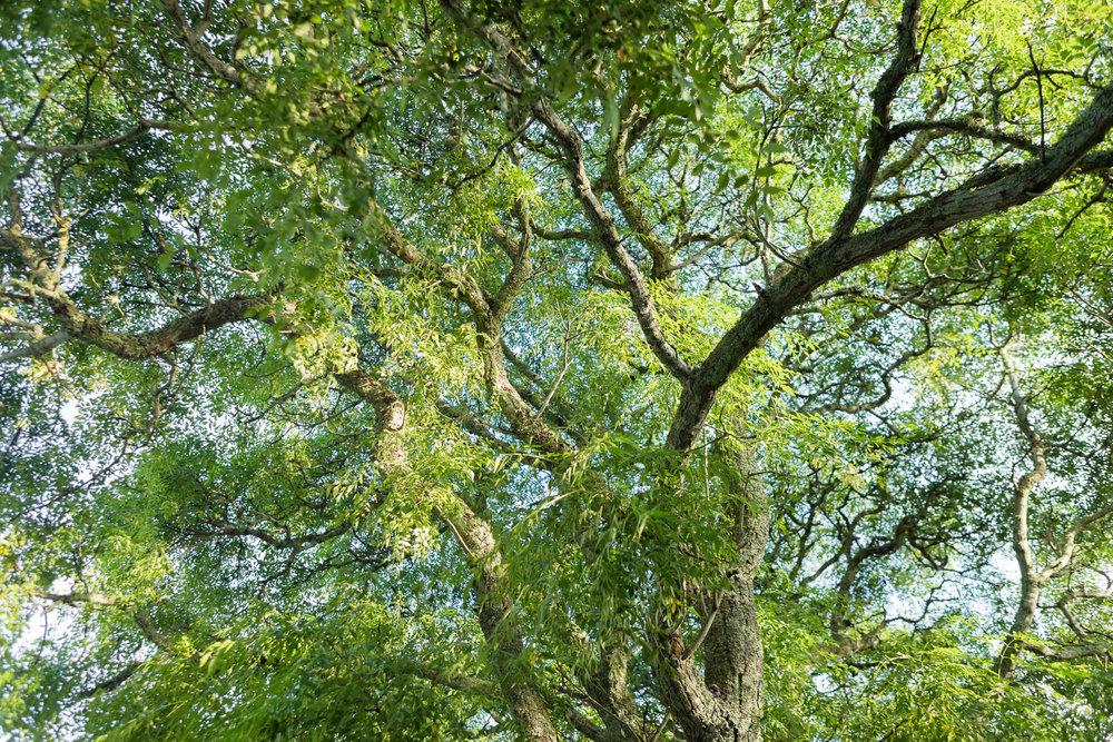 TreePruning.jpg