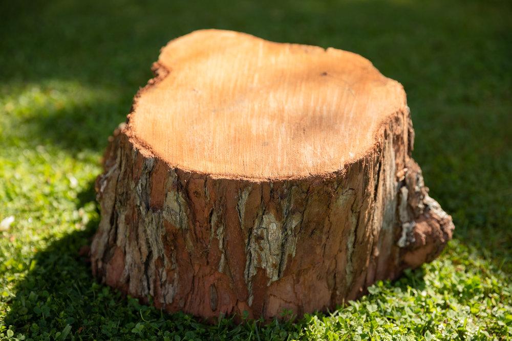 Stump-Grinding-Auckland.jpg