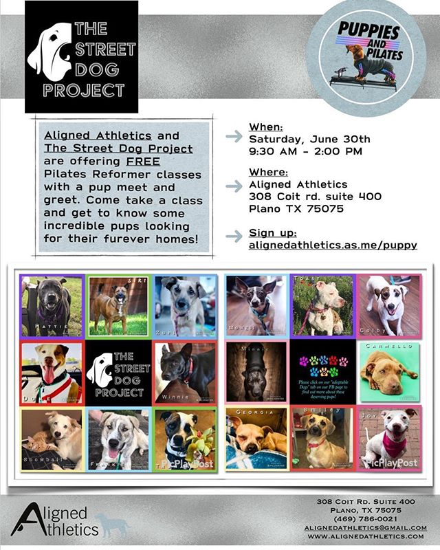 Aligned Athletics is joining forces with The Street Dog Project to offer you a free, 30 minute reformer class, featuring dozens of adoptable puppies. Come explore the latest workout trend: Puppies and Pilates. Hopefully you'll find an adorable furry friend to adopt! Sign up here: https://alignedathletics.as.me/puppy