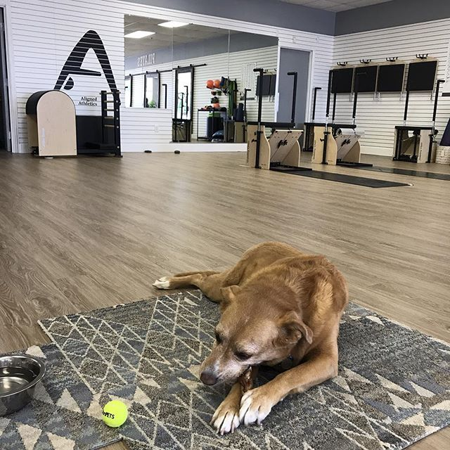 Blue Bonita is having a PAW-tastic time in the studio today #doglates #pilates #alignedathletics