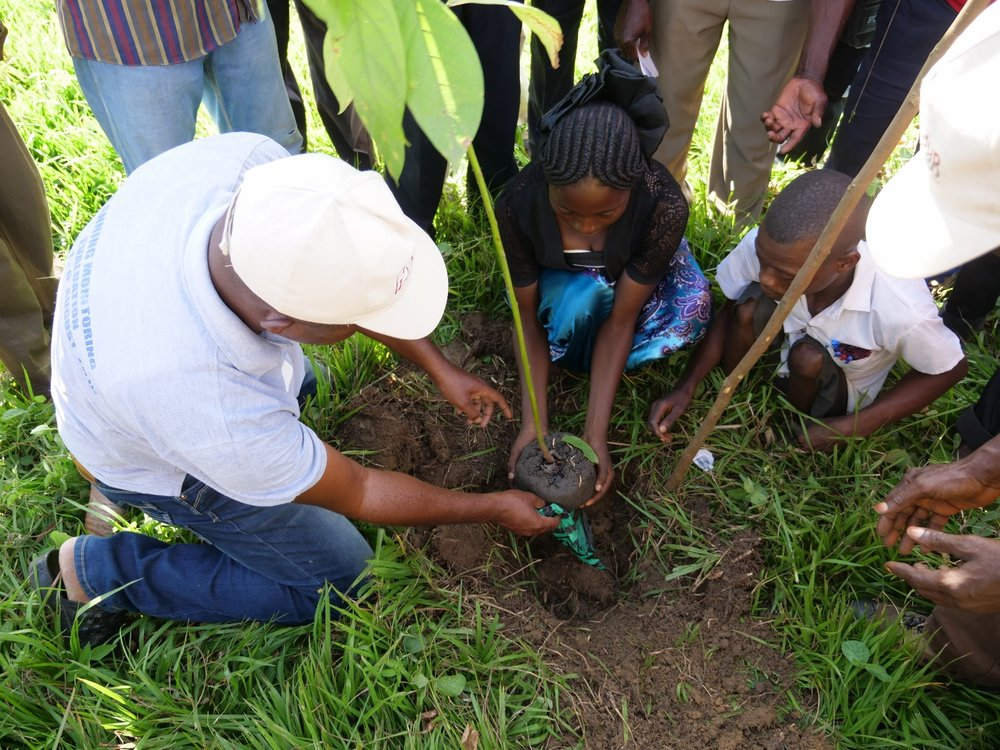 Tree planting starts with a ceremony