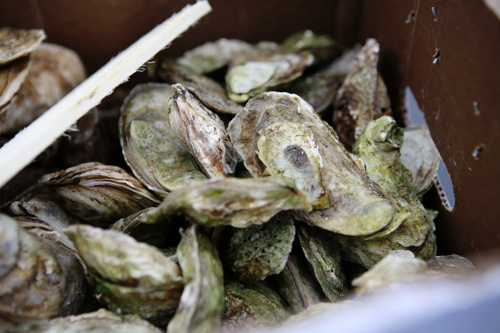 After 40 Minutes - Since the inaugural edition in 2014 it is customary that oysters are served to players during the second intermission. Fortunately, spectators won't have to wait that long to enjoy on a year one tradition courtesy of Notkins Oyster Bar.