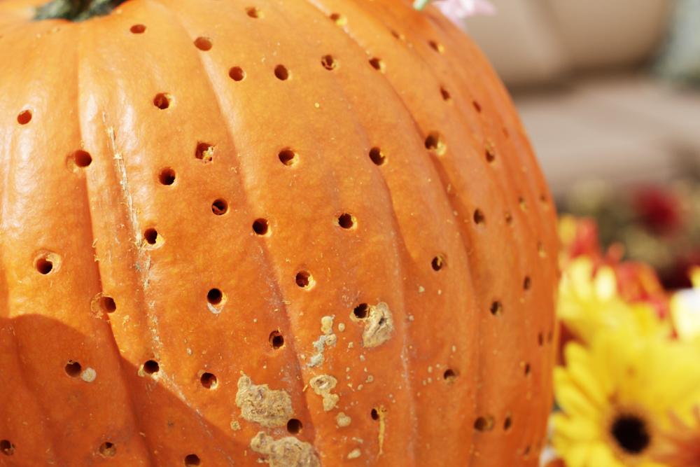 FlowerPumpkins5.jpg