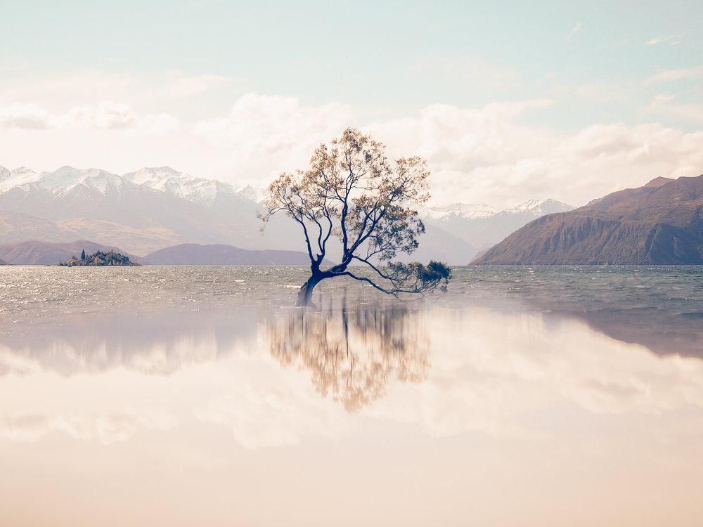 """I know I know! We've all seen a gazillion images of 'that Wanaka tree"""", but this one is special to me because I learnt a new trick this day in New Zealand, with the Olympus tribe, on how to create a reflection (I'll let you in on the secret another time) off the lovely, extremely talented Lisa Michelle Burns aka  The Wandering Lens as we tested out the newly launched  OM_D E-M10 Mark III and everyone was going crazy over it!"""