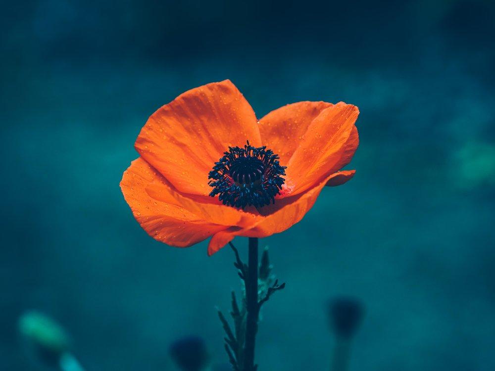 flora life -