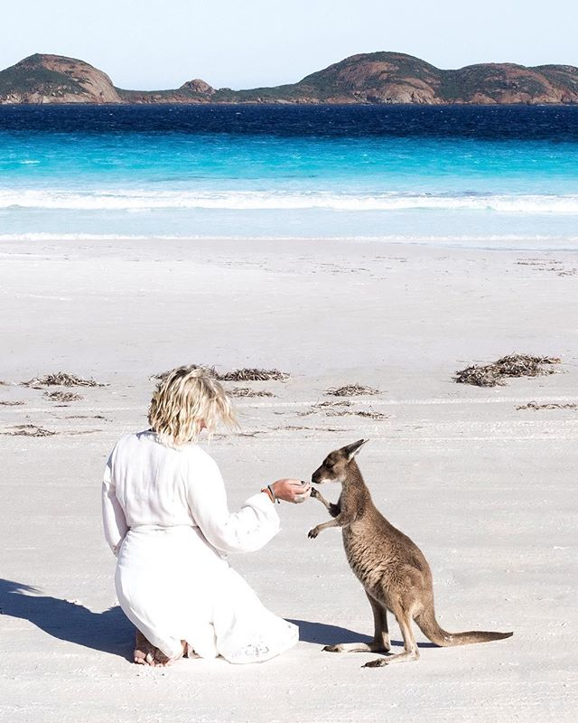 Animal friends are my favourite. True story! Haha! 🙊💙😉 Gosh, I'm finally getting some time to edit images from my INCREDIBLE @westernaustralia #roadtrip a couple of weeks ago! I'd happily have a few more days like this one. Take me back!😍 #justanotherdayinwa • • This was taken at Lucky Bay, which is situated in Cape Le Grand NP, and is about an hours drive from Esperance. The most beautiful place!! X