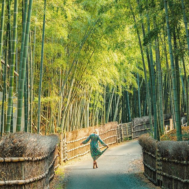 ...and the bamboo dances gently into the brightness of a happy day • • • • exploring lesser known parts of Kyoto to find a quiet moment in a bamboo grove by the name of take-no-michi 🎋🇯🇵💚there is something so calming about being amongst the bamboo 🧘🏼♀️🍃 @visitjapanau #visitjapanau