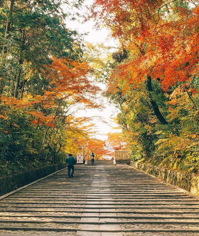 Kyoto in Autumn 🍁🇯🇵🧡🍂 finding quiet moments amongst the busy-ness of a long weekend in beautiful Ao of Kyoto 🎋 @visitjapanau #visitjapanau