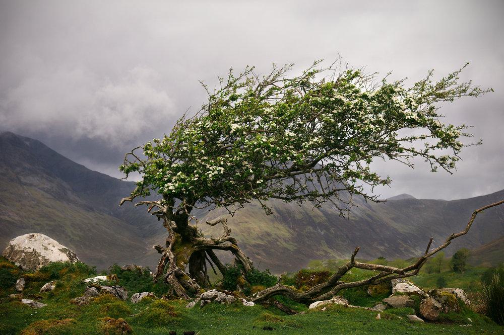Near Elgol, Skye
