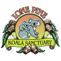 lone-pine.jpg