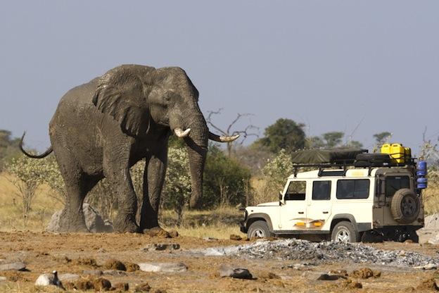 African_elephant_size.jpg