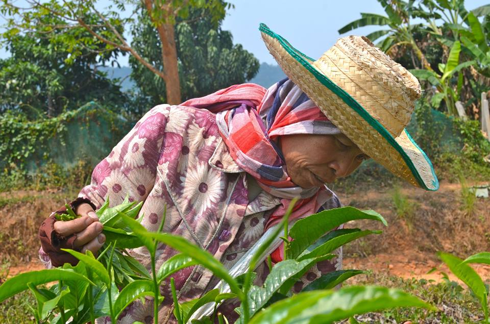 Sustainable hand picking