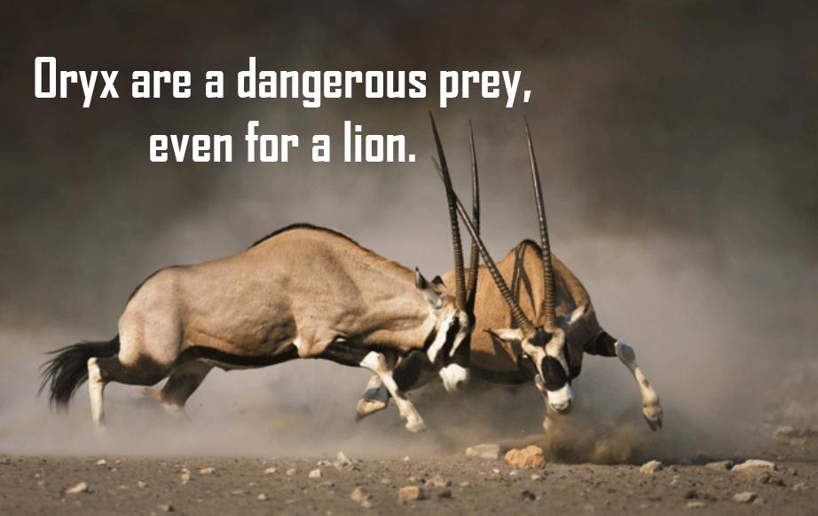 oryxprey.jpg