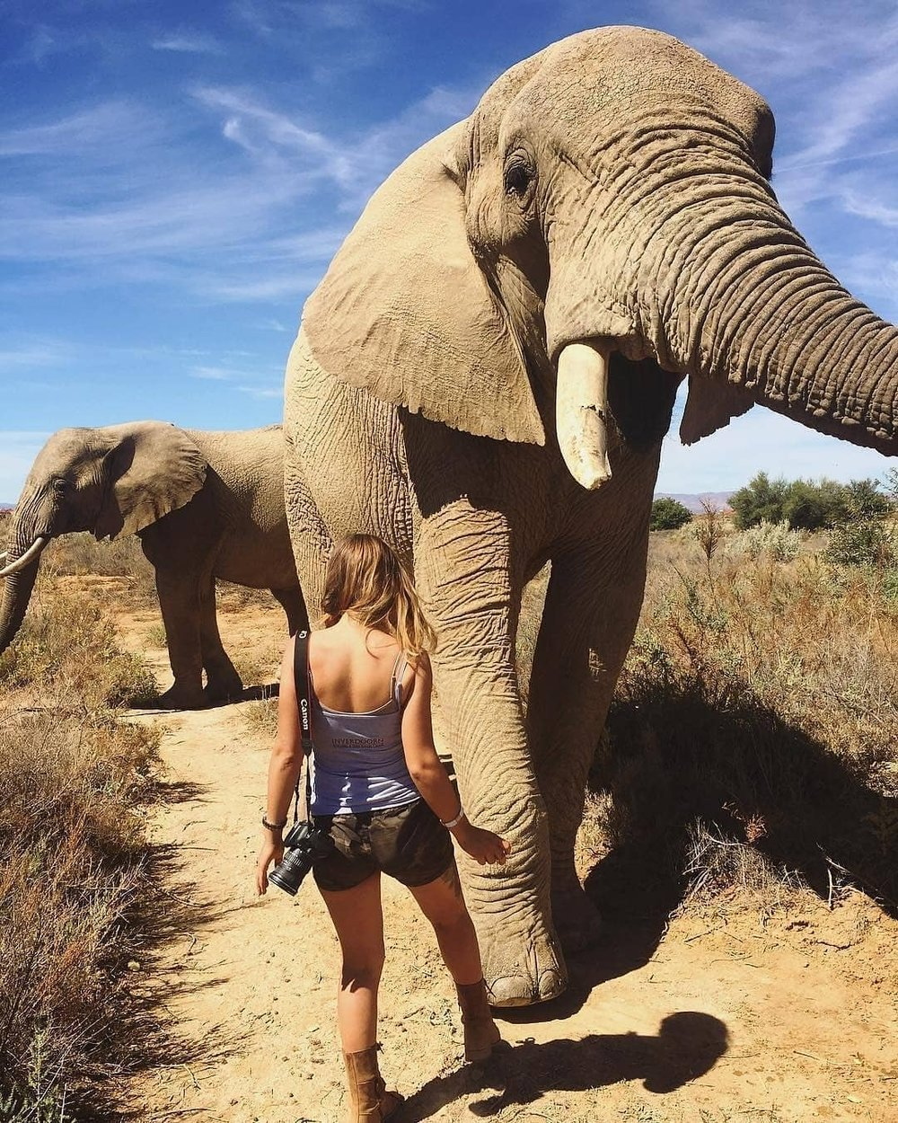 Lisa is more known for her photographs of (and with) cheetahs on the in Western Cape Cheetah Conservation but here she stands in front of an African elephant. We wouldn't recommend standing in an elephant's way but Lisa is up close and personal with the photo to capture this incredible moment!