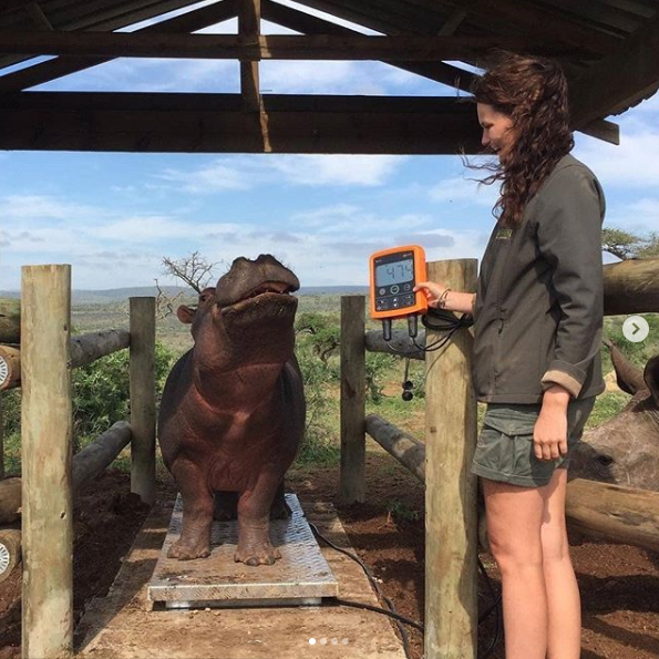 "Doesn't that hippo look happy! 😁 ""Our little ones are getting used to their new scale from Gallagher! We did a weigh in this morning and they all did such a great job on the scale!"" - Zululand Rhino Orphanage"