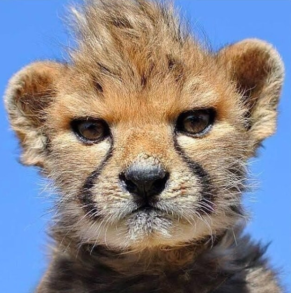 This little cub looks like a cool dude!  You guys loved him and so did we (especially that awesome hairstyle)!