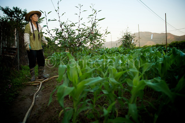 Jeannie Tong, farmer, stands over her organic crops