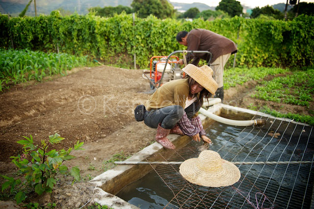 Hong Kong farmer water washing