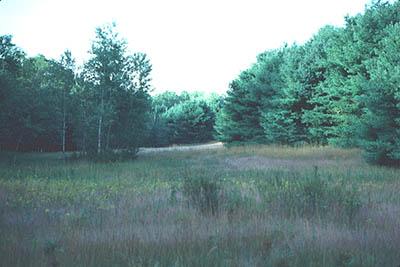 field.jpeg