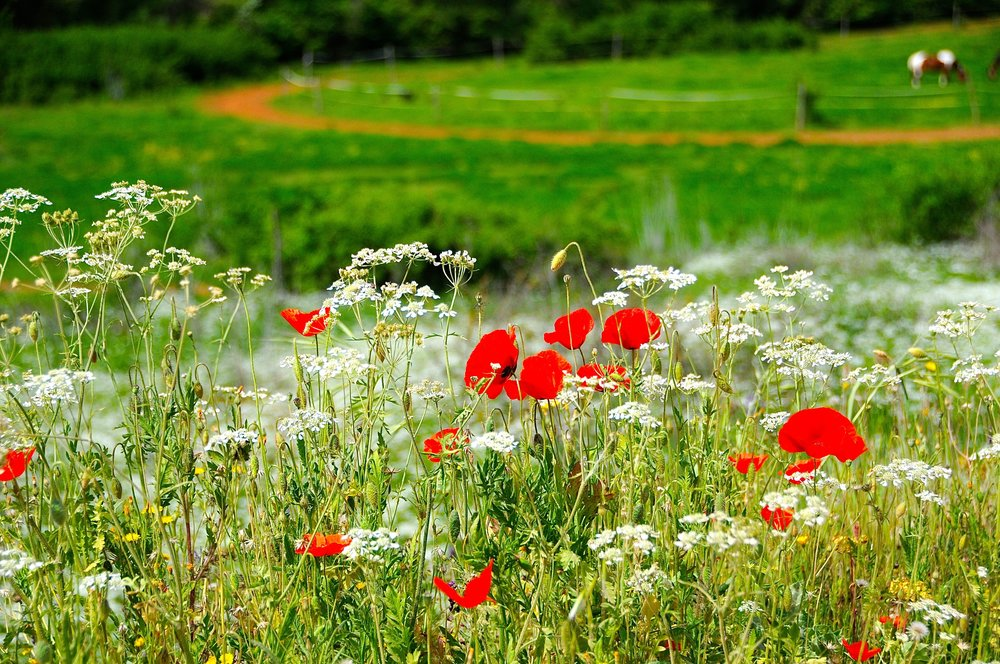 Toscanaturen Foto Kjell Helle-Olsen (38).jpg
