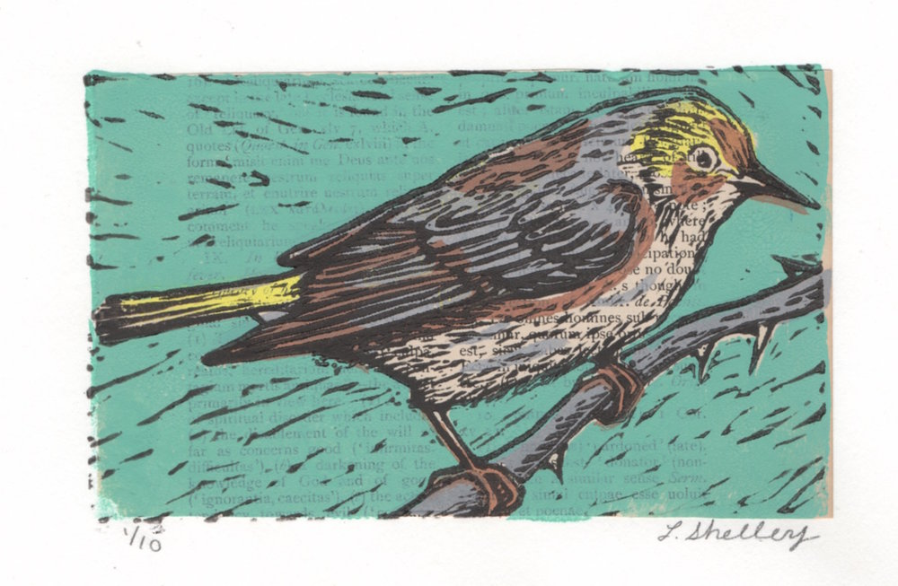 Cape May Warbler.jpeg
