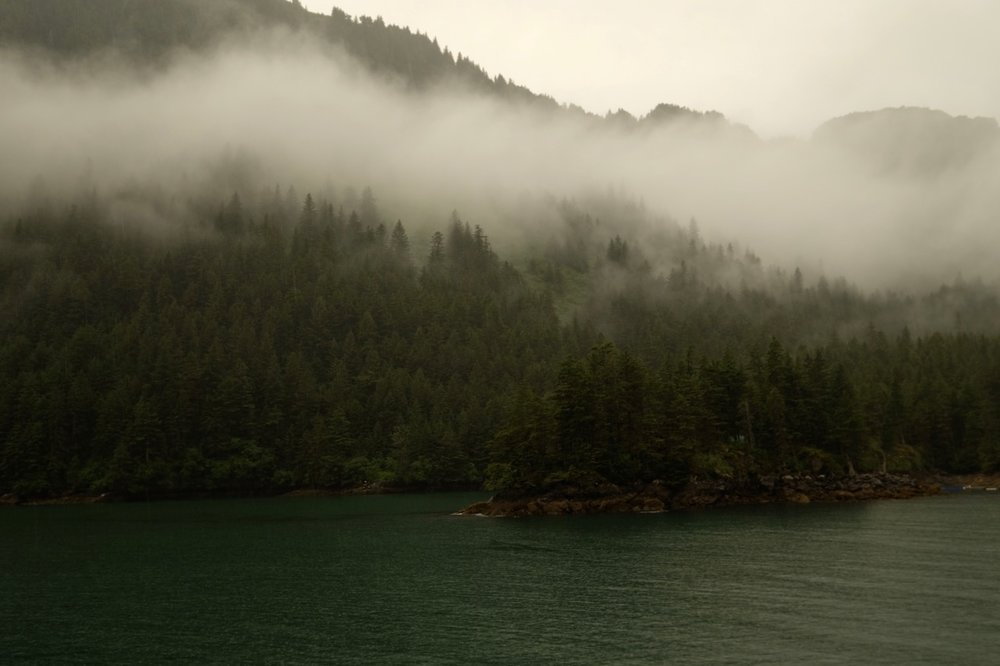Fog on the temperate rainforest there.