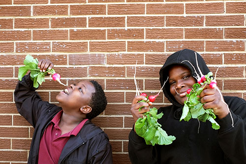 Students harvesting radishes grown in the school garden to be used for cooking