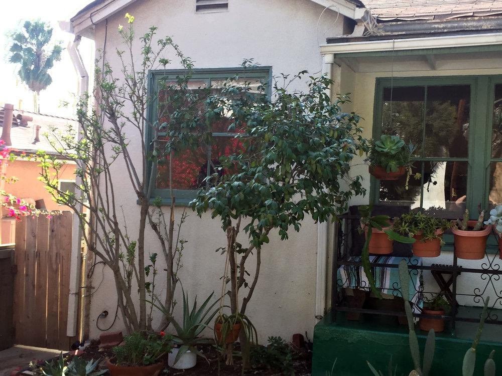 porchplants.jpg