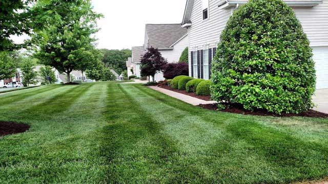 Mowed grass and trimmed bush, complete lawn maintenance by Ivanoff.
