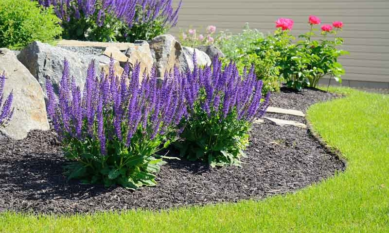 Plant bed with purple flowers near lush green grass, Landscape services by Ivanoff.