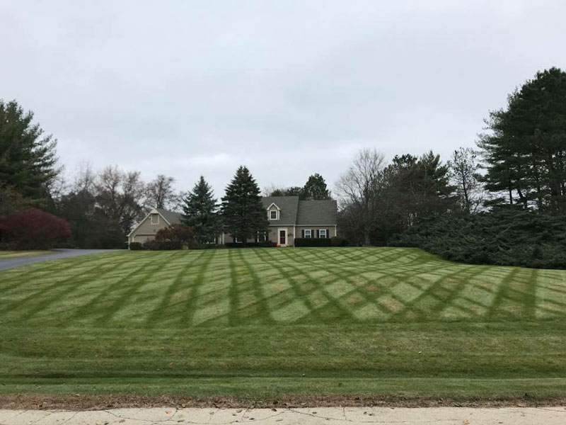 Large mowed residential yard by local lawn care and landscape company.