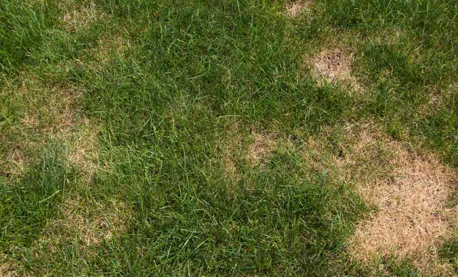Lawn Care Maintenance How To Get Rid Of Grubs Columbus