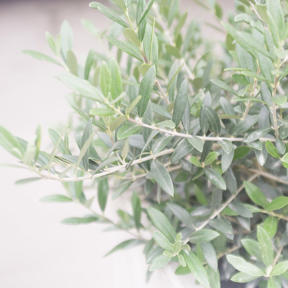 Magnolia-27.jpg