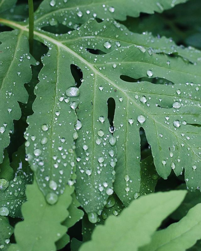 La magie des jours de pluie ✨