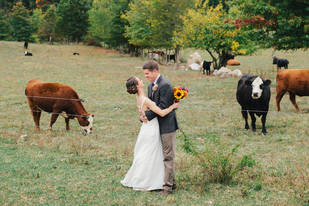 Bride and groom embracing eachother in front of cows on Kiernan Farm.