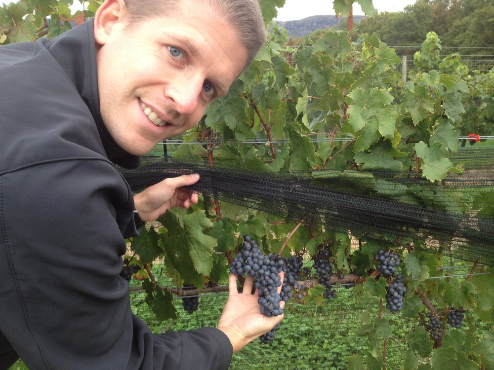 Copy of A farmer holding a cluster of grapes in Bruynswick Vineyard.