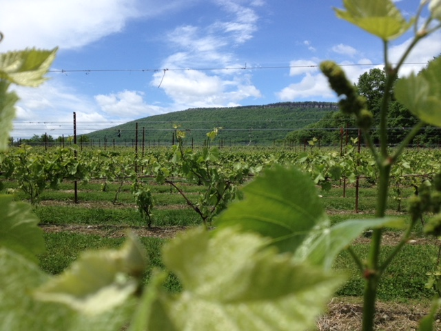 Vineyard_View_Mountain.jpg