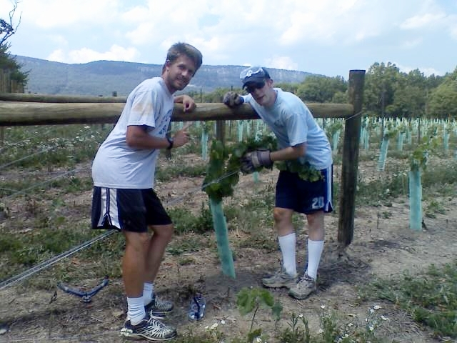 Copy of Two young farmers planting a vineyard.