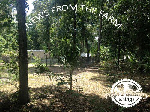farm copy.jpg