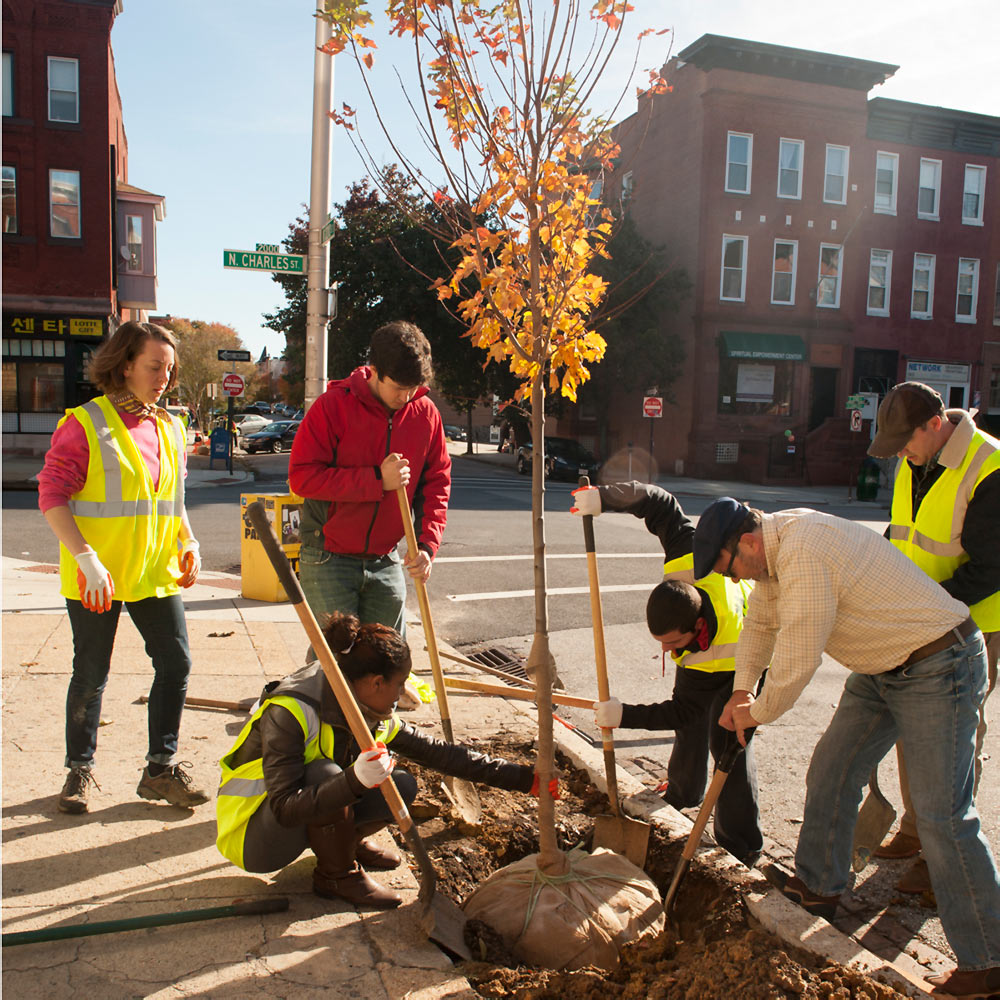Tree planting in Old Goucher - Photo by John Dean
